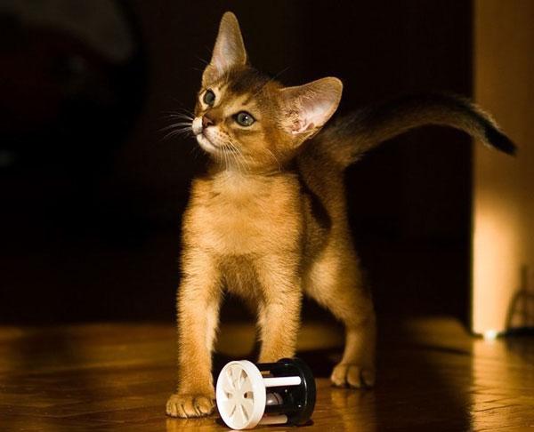 почему у кошки пахнет изо рта ацетоном
