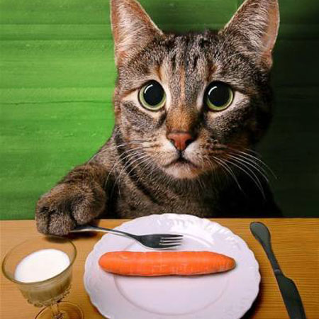 Кошку про ее и диета