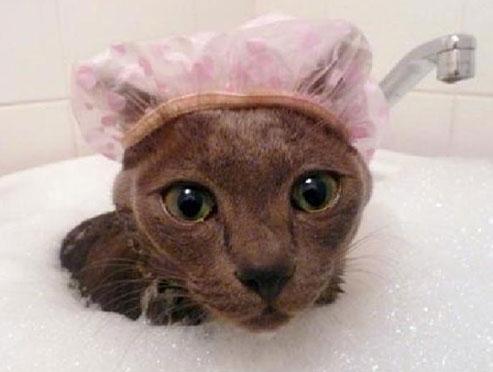 Если коту попала в ухо вода