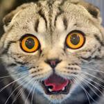 Кастрация кота: что нужно знать перед операцией