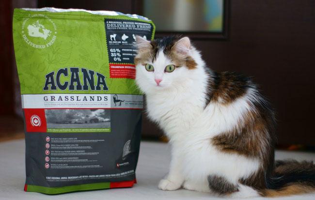 Кошачий корм акана