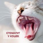 Стоматит у кошки. Лечение в домашних условиях