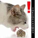 Токсоплазмоз у кошек: диагностика, лечение и профилактика
