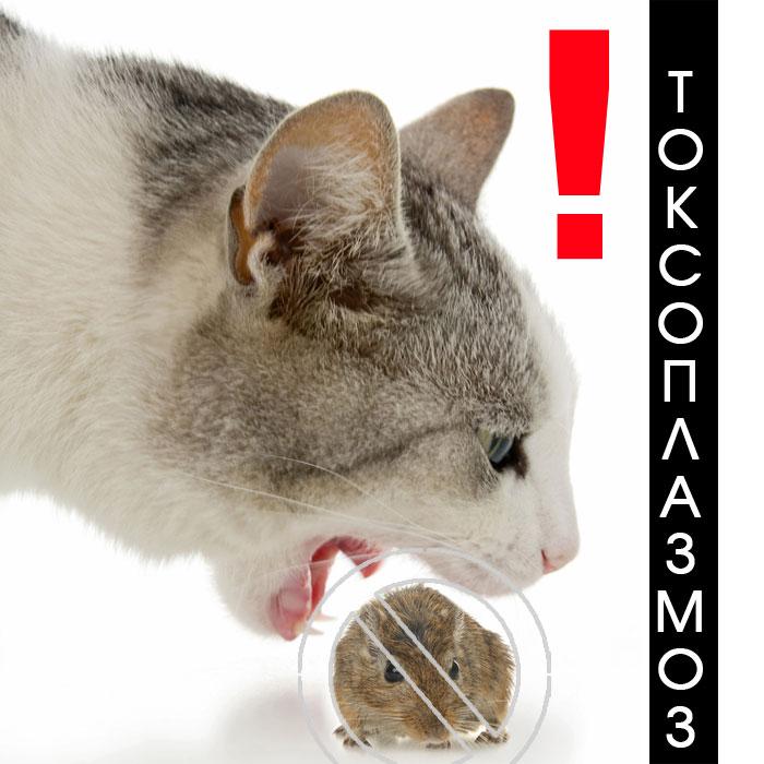 Токсоплазмоз и кошки беременность