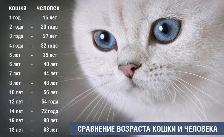 Сколько месяцев коту по человеческим меркам