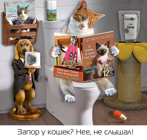 ожирение у кошек причины
