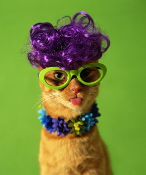 Фиолетовый парик и ярко-салатовые ...: www.kotblog.ru/smeshnye-koshki/koshki-v-smeshnyh-kostyumah.html