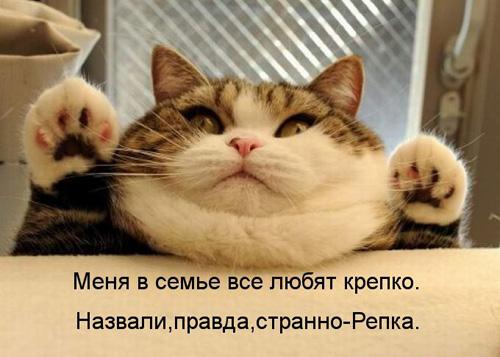 Картинки смешные про кошек и котов
