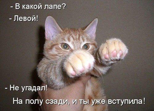 http://www.kotblog.ru/wp-content/uploads/2012/05/0211.jpg