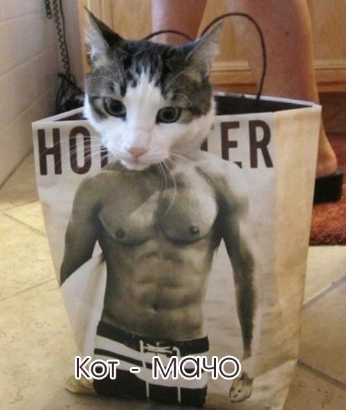 много смешных картинок про кошек