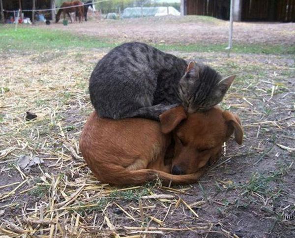 L'art de faire la sieste (par nos amis les chats)  045