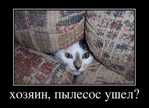 Демотиваторы с кошками 1 часть