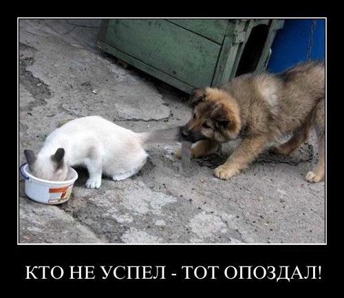 Демотиваторы с кошками