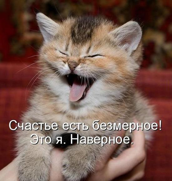 Юмор смешные кошачьи клички