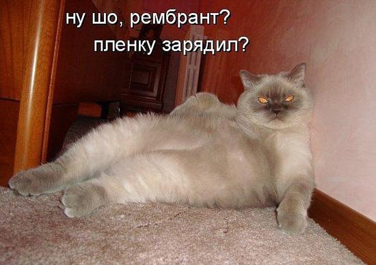 Смешные коты толстые