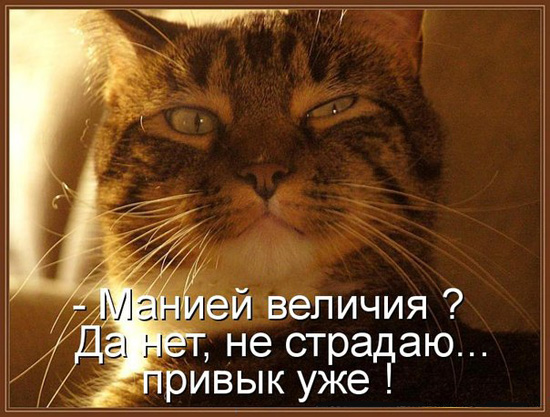 Рэгдолл фото кошки цена описание породы характер