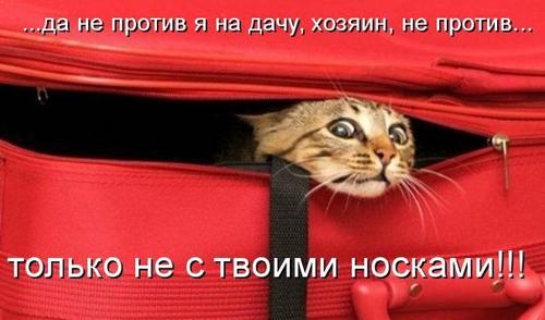 http://www.kotblog.ru/wp-content/uploads/2012/07/24.jpg
