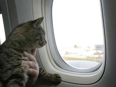 Путешествовать с котом