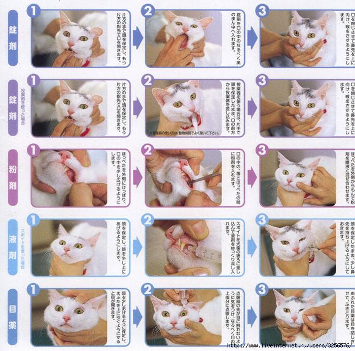 как давать таблетки от глистов котам натощак