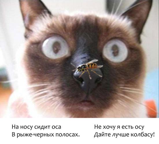Ящерица укусила кота