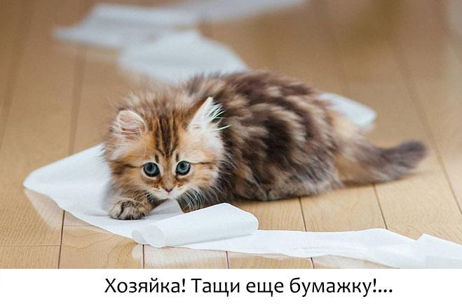 У кота понос средство