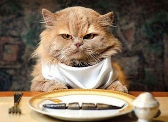 Картинки по запросу диета для кошек