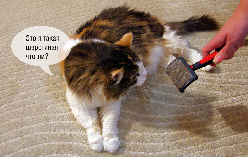 семьи линька у кошек картинки установка собранных арок